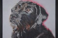 Jenny-van-der-Bor-hond